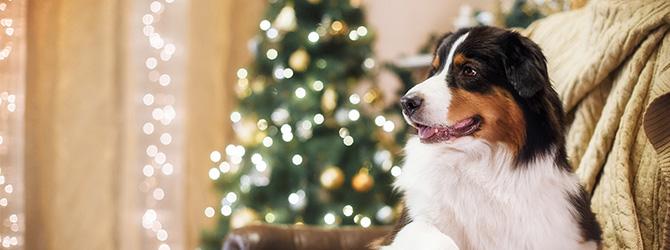 adorable dog infront of christmas tree