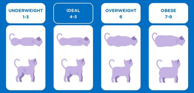 Cat Weight Chart