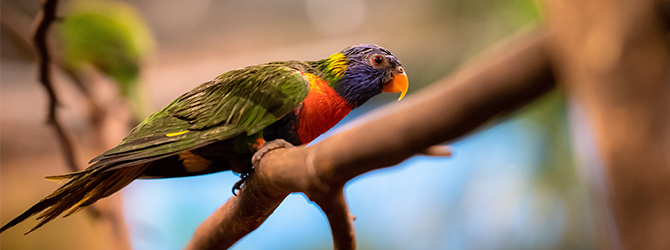 multi-coloured bird