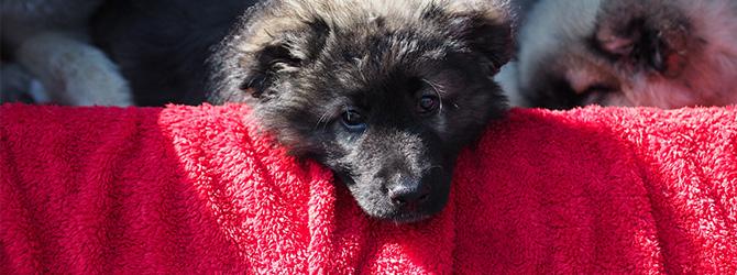 dog snuggled up under blanket