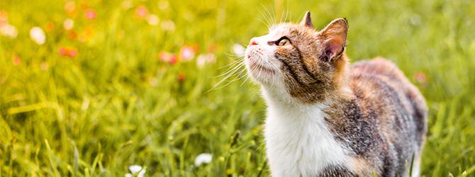 ginger cat on green grass