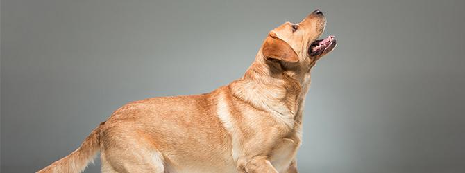 dog jumping up at clicker