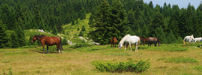 3 horses in beautiful green field