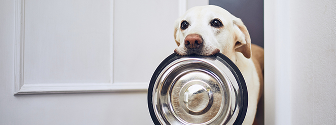 dog with bowl in jaws