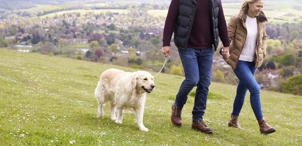 couple walking a golden labrador on a hill