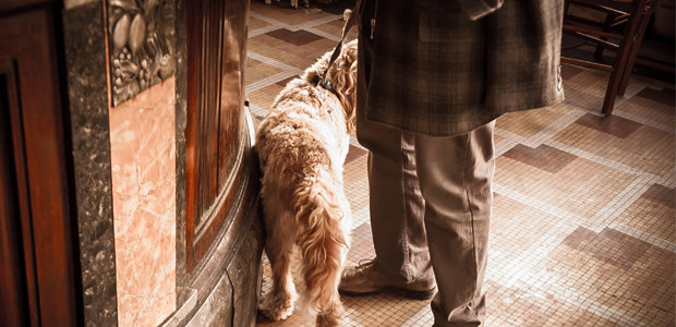 dog on the lead in a pub