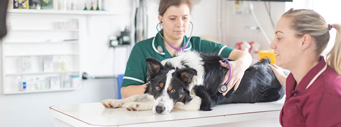 dog in vet practice