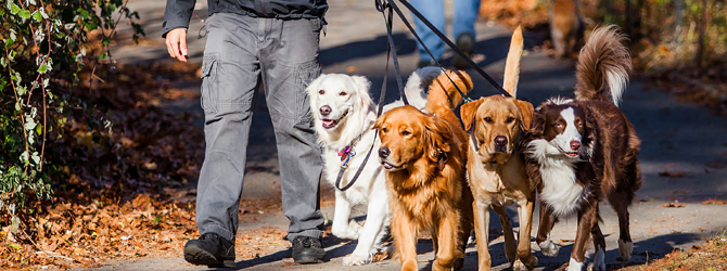 a group of dogs walking in the park