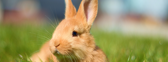 lovely ginger rabbit on field