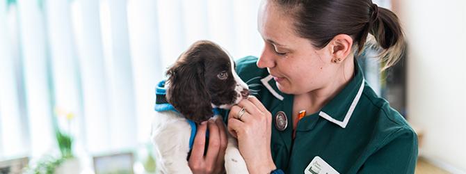 vet tending to adorable puppy