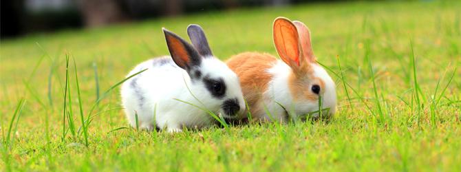 black and white rabbit