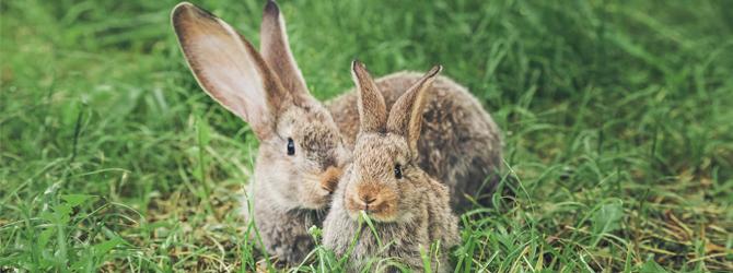 adorable rabbit with autumn backdrop