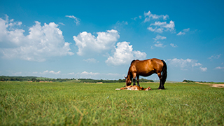 horse and foal in field on summer's day