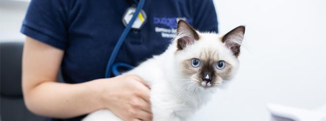 A kitten visiting the vet