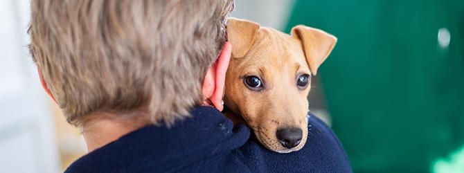 adorable puppy over owner's shoulder