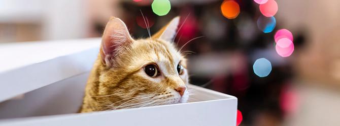 cat peering out of box ahead of xmas tree
