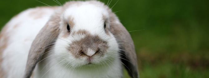 cute brown and white rabbit