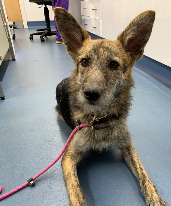Rescue dog at the vets