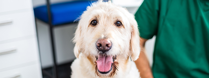 lovely dog in vet practice