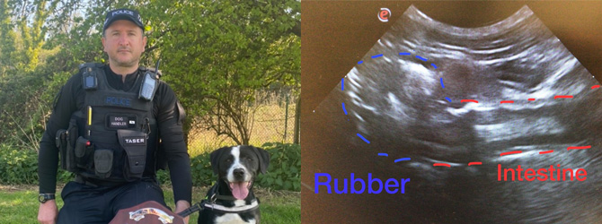 split image of officer and dog/ultrasound of rubber