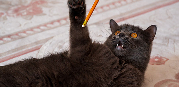 cat playing with end of a pencil