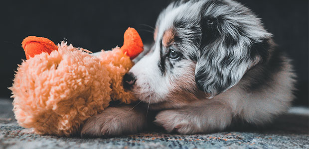 adorable puppy with cuddly toy