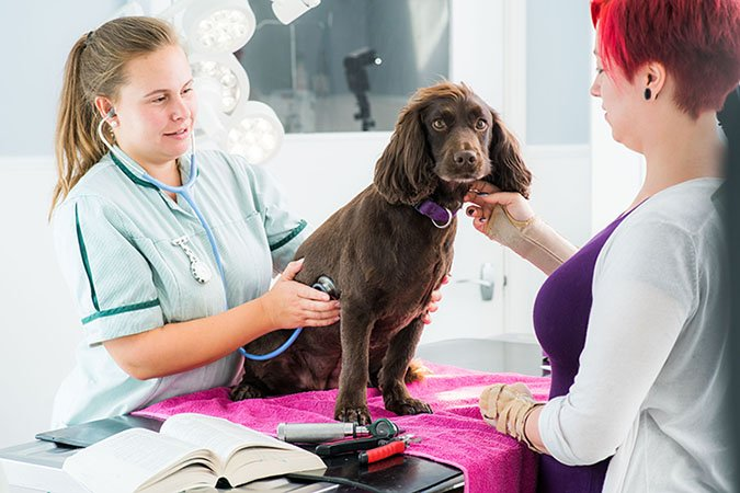 vet in consultation with dog