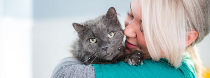 cat receiving vet attention