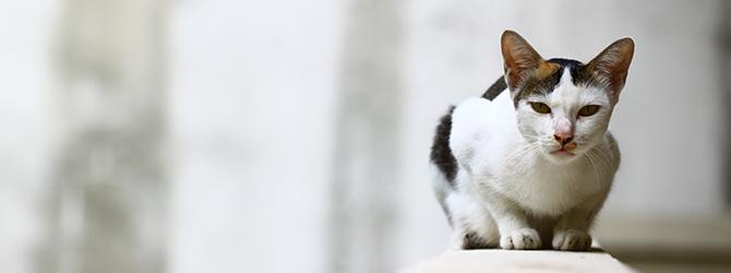 white cat sitting on beam