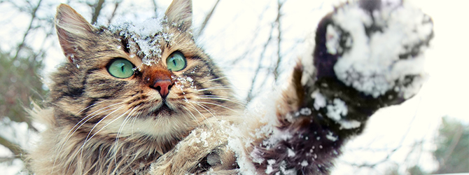 cat playing in the snow