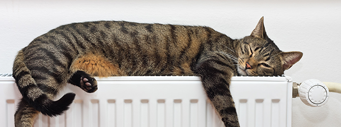 cat sleeping on radiator