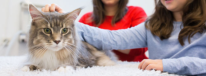cat being stroked in veterinary surgery