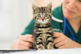 cat attending vet appointement for flea check