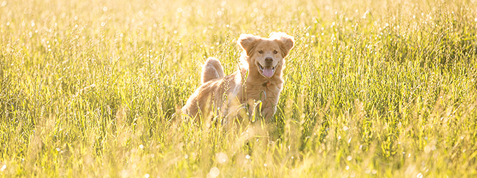 dog in field where the grass is tall