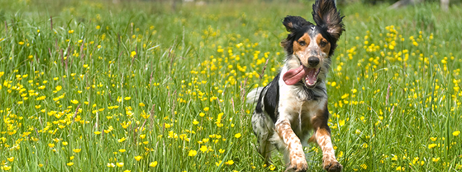 Top 10 facts about dogs