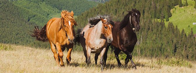 horses on the mountains