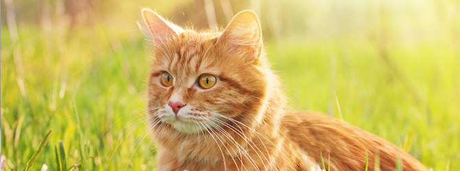 cat having veterinary check up
