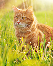 ginger cat sat in tall grass