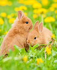 two bunnies in field