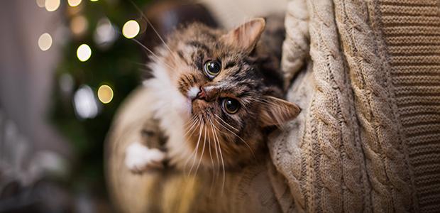 cat on sofa at christmas