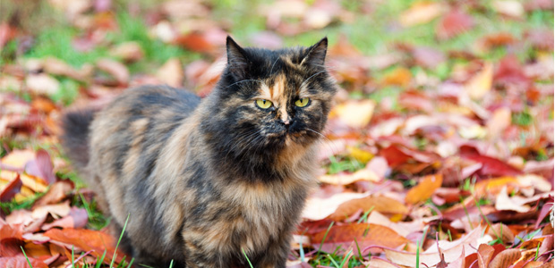 black and brown cat in an autumn field