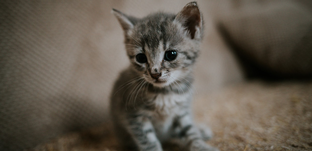 close up of kitten