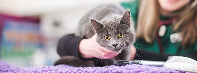 cat receiving attention at veterinary surgery