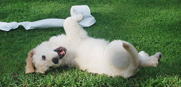 cute dog rolling about with toilet roll