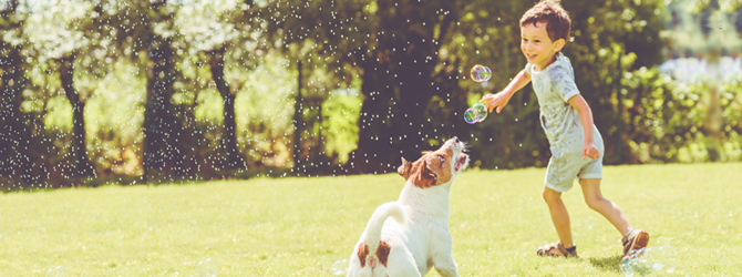 A dog playing with young boy in a field
