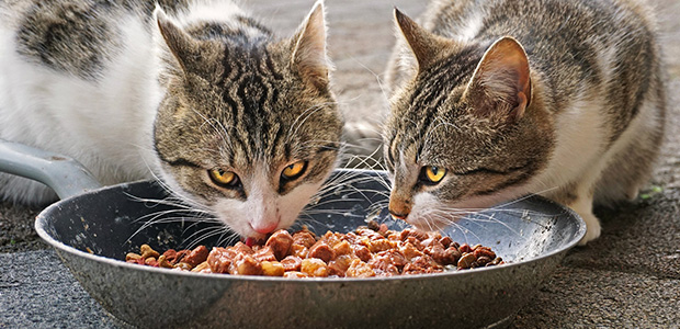 two cats eating cat food