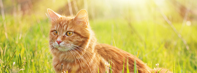 ginger cat on green grass