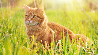 ginger cat in lush green grass