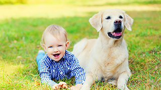 yellow labrador on green grass next to small baby