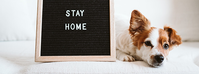 jack russell lying next to a stay at home sign